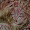 jukebox.php?image=micro.png&group=Pharmakon&album=Pharmakon%3B+Contact
